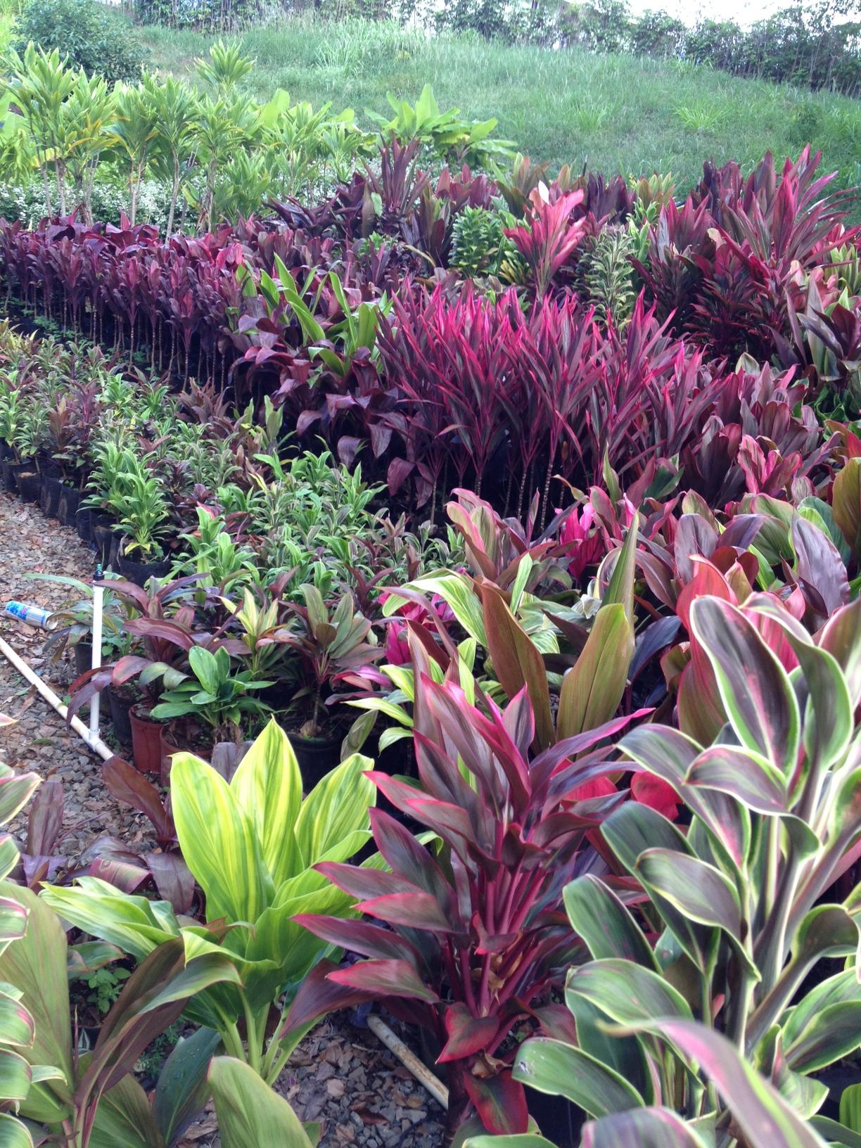 Kauai Hydroseed & Landscape | Official License Records and