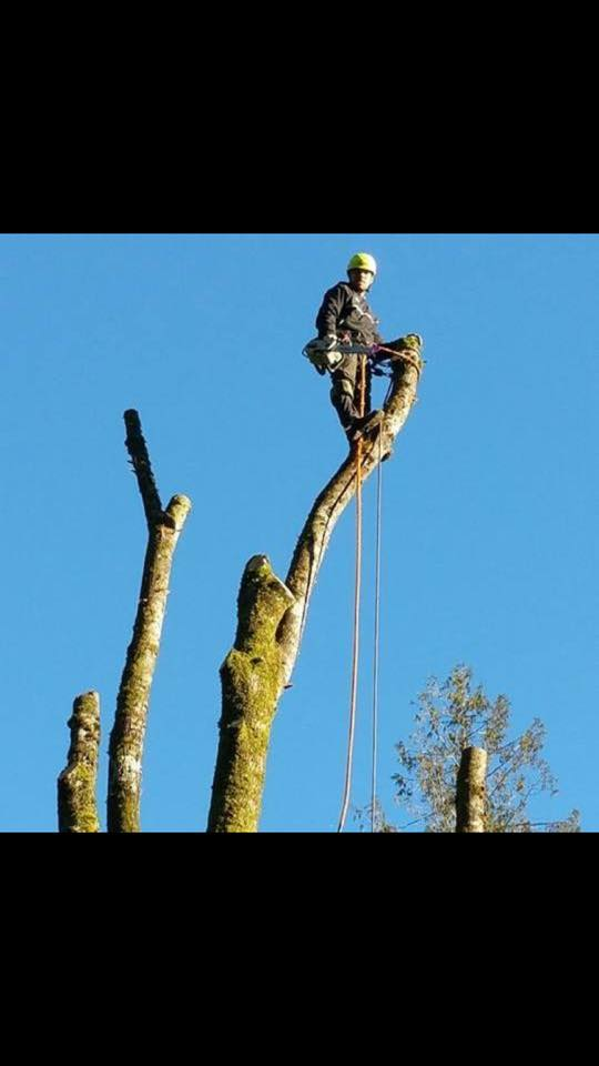 Hoyts tree service bremerton read reviews get a bid for Get bids